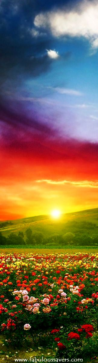 Floral Sunrise