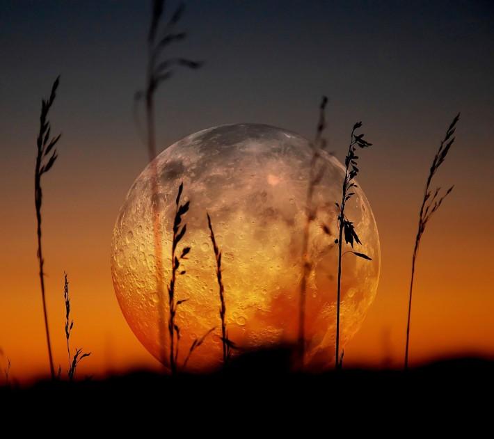 Full Moon on Horizon Full_Moon_and_Grass-wallpaper-10502174